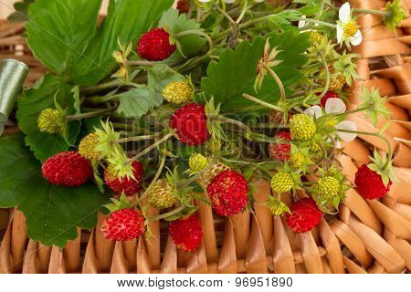 Woodland Strawberries in close-up