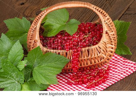 Basket of redcurrant with green leaves on red checkered tablecloth