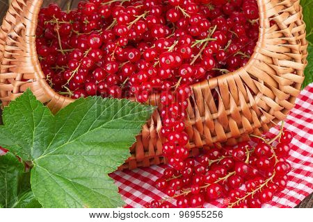Basket full of redcurrant with green leaves on red checkered tablecloth
