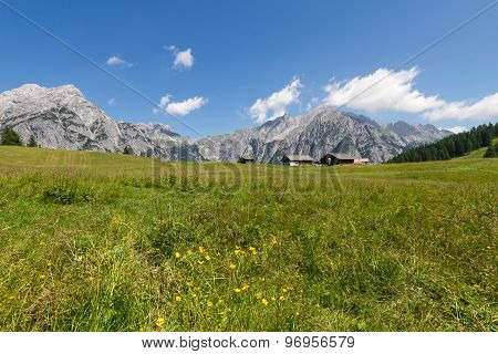 Mountain landscape in the Alps with flowers meadow. Austria Walderalm.
