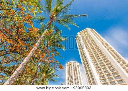 Palm tree tops against apartment or hotel building and blue sky. Vacation tropical background.