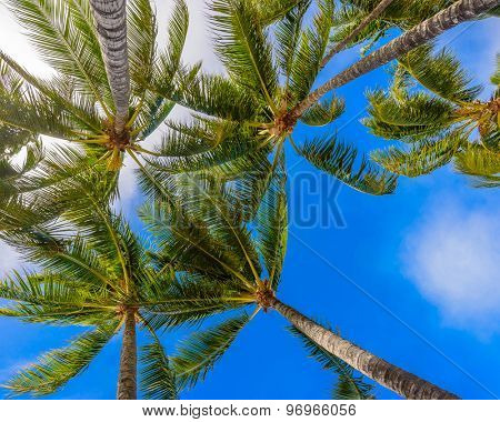 Palm tree tops against blue sky. Vacation tropical background.
