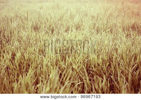 View The grass meadow abstract background -  retro style