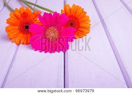 Chrysanthemums on violet planks