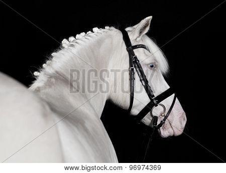 Riding Pony White