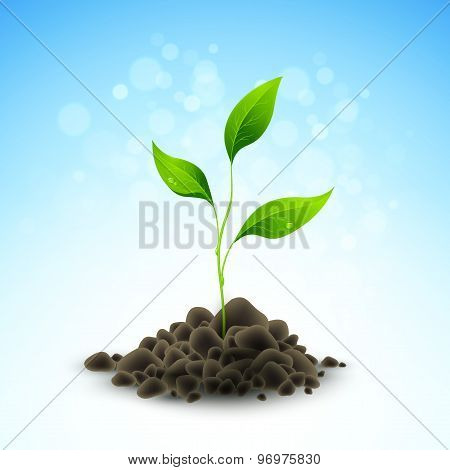 Plant sapling growing. Vector illustration