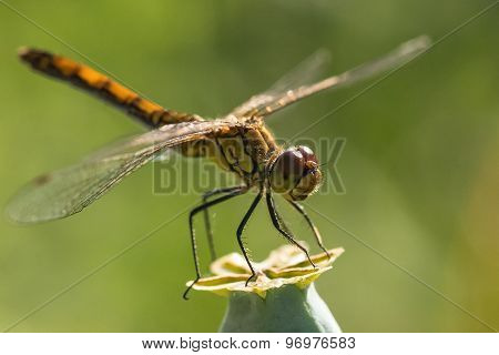 Dragonfly Insect Branch