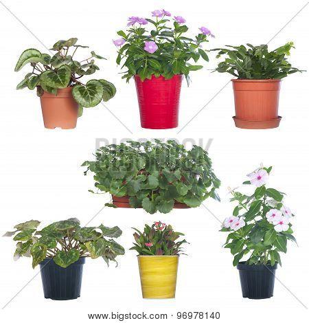 set pot plants isolated on white