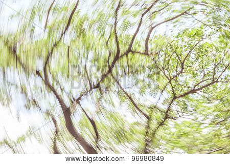 Blurred Photo View From Under Shade Of Tree In Green Forest.