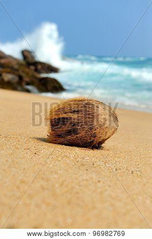 Coconut On Tropical Beach