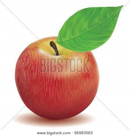 illustration vector ripe apple red color
