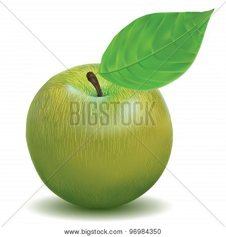 illustration vector ripe apple green color