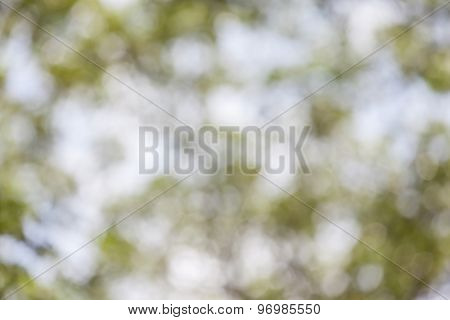 Blurred Bokeh Photo Of Green Foliage In Forest Background.