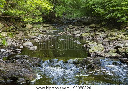 Mountain Stream Through Green Forest