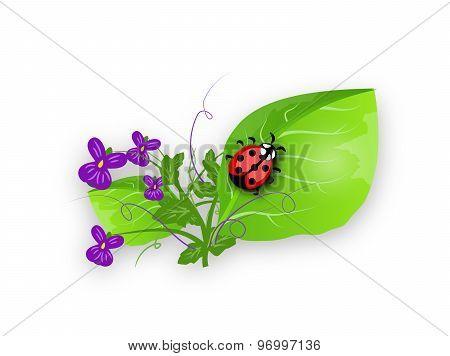 Ladybug On Violet