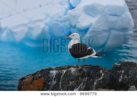 A Bird On A Rocks