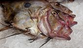 image of dory  - John Dory fish on a bed of ice - JPG