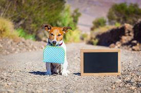 foto of street-walker  - jack russell dog abandoned and left all alone on the road or street with luggage bag or suitcase begging to come home to owners - JPG