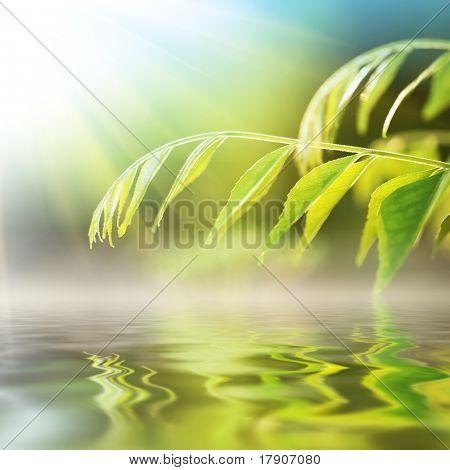 Verde grama sobre a água em dia ensolarado.