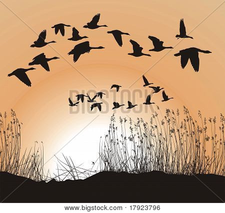 Reeds And Geese.eps