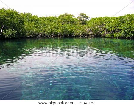 mangrove river in central america mexico quintana roo
