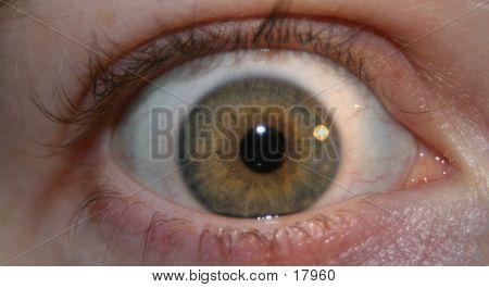 Green Eye Close