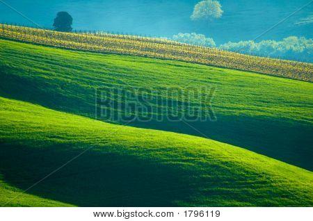 Sensuous Hills