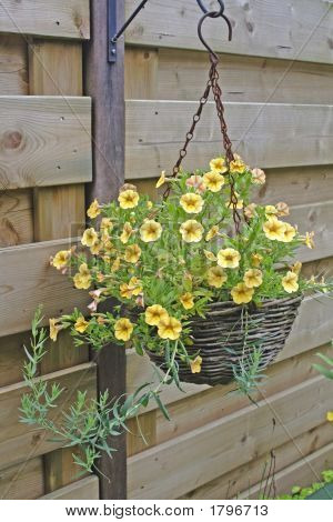 Hanging Basket With Yellow Flowers