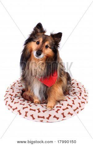 Dog Sitting In Plush Bed