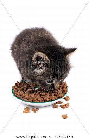 Kitten Eating Hard Food