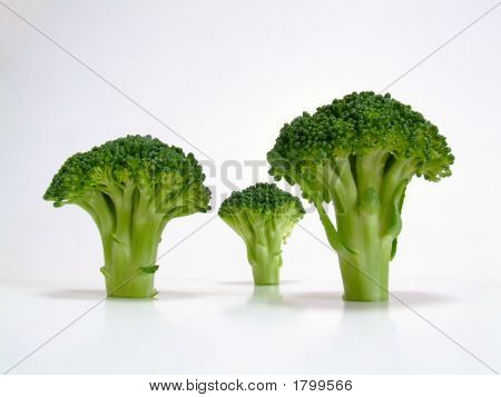 Broccoli Trees #1