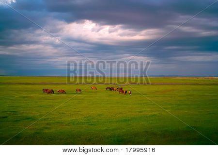 Horses In Grassland