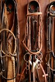 pic of reining  - Horse riders complements - JPG