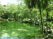 picture of cenote  - cenote lake in Riviera Maya jungle mayan Quintana Roo - JPG