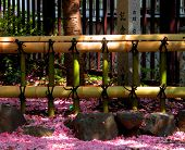 Fence And Petals poster