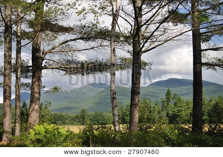 Line Of Pines And Mountains In Maine