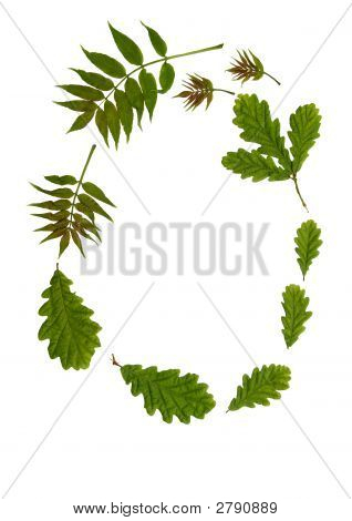 Garland Of Leaves