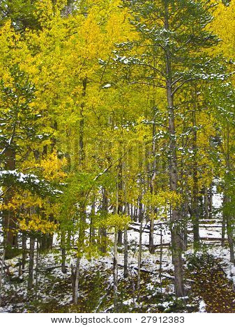 Autumn Forest With Snow