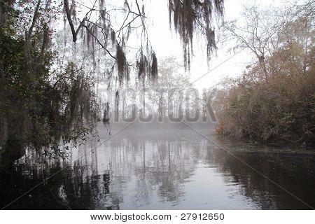 Névoa de manhã cedo em um pântano de Geórgia