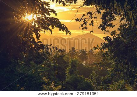 poster of Rainforest Jungle Nature Landscape. Sunset In Jungle Nature. Jungle View. Nature. Sunset In Nature.