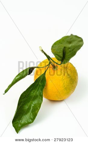Citrus With Leaves