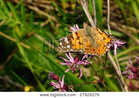 butterfly in the flower