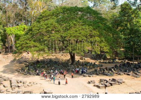Baphuon Temple Tree