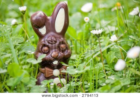 Easter Rabbit In Daisies