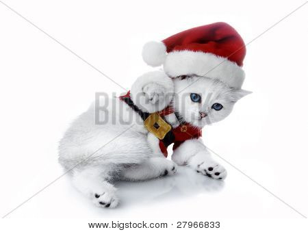 Kitten in a New Year's suit sleeps on a white background. Kittens of the British breed. Rare coloring - a silvery chinchilla