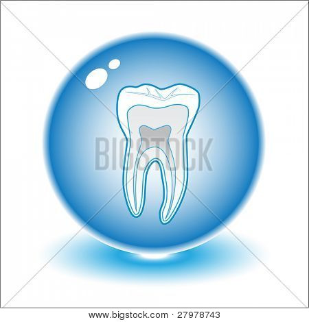 Vector tooth illustration. Simply change. Other medical vectors you can see in my portfolio.