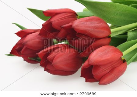 Fresh Pretty Bouquet Of Red Tulips