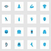 Physique Icons Colored Set With Arm, Skull, Head And Other Head Elements. Isolated  Illustration Phy poster