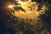 Rainforest Jungle Nature Landscape. Sunset In Jungle Nature. Jungle View. Nature. Sunset In Nature.  poster