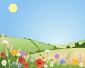 pic of harebell  - an illustration of summer wildflowers in a beautiful landscape with poppies daisies cornflowers harebells corncockles and wheat under a blue sky - JPG